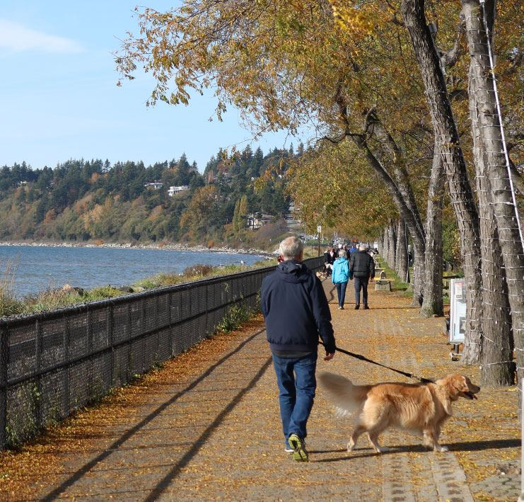 Man walking a dog on a leash along the White Rock promenade